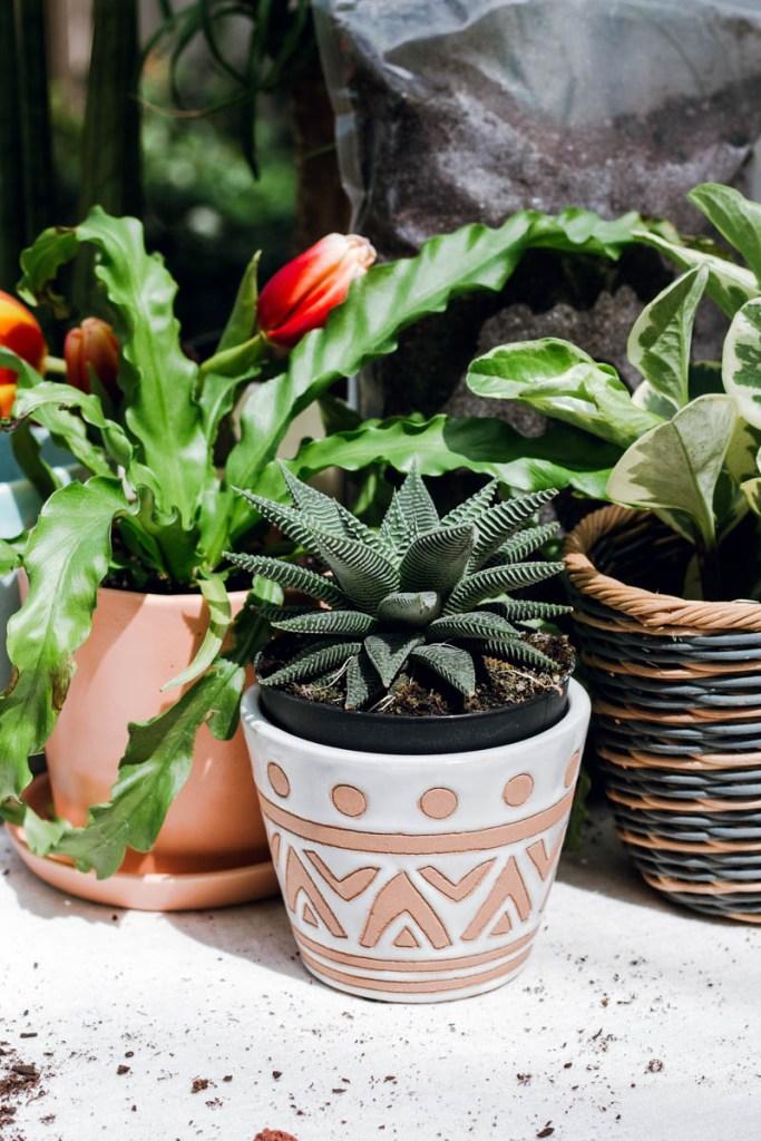world market pot succulent