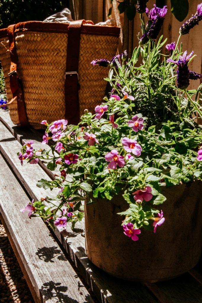 bacopa garden teak bench French garden lavender