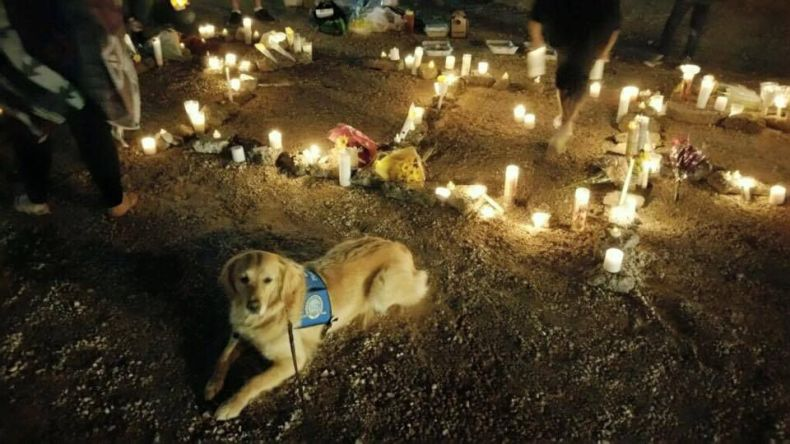 Ruthie the comfort dog attends the vigil.