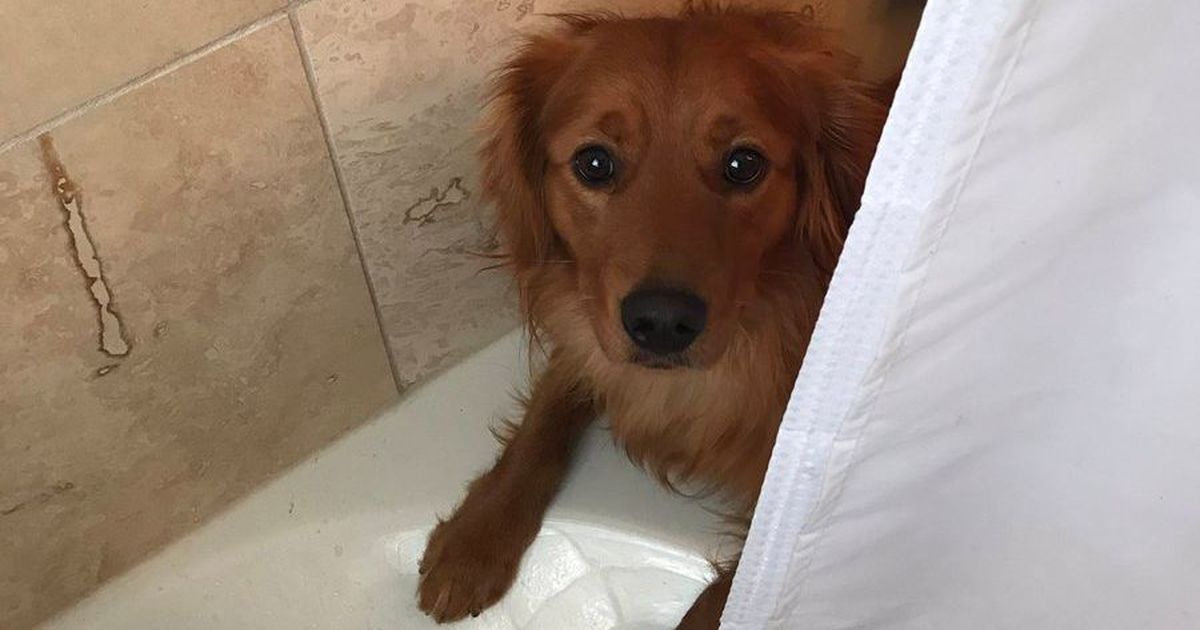 Good Dog Tries To Cheer Up Human In Shower, With Adorable Results