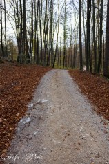 Roads untraveled...?