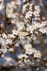 Spring1407