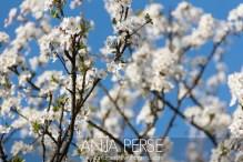 Spring1411