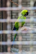Green parrot in a ZOO.