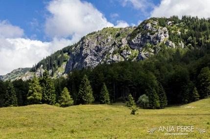 Nature on Velika Planina