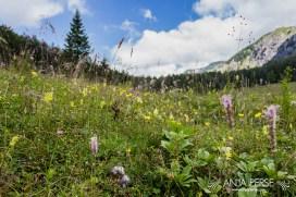 Mountain plants