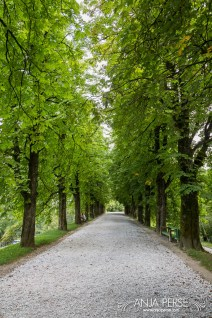 Avenue at Ljubljana castle