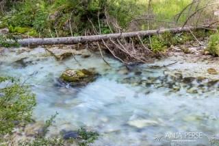 Fallen tree on river bank