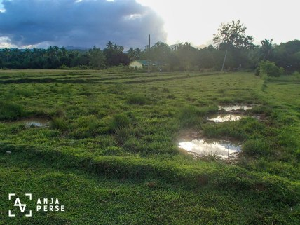 Rice fields on Marinduque island