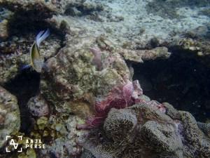 Underwater life...