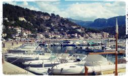 The harbour in Port de Soller with many little boats