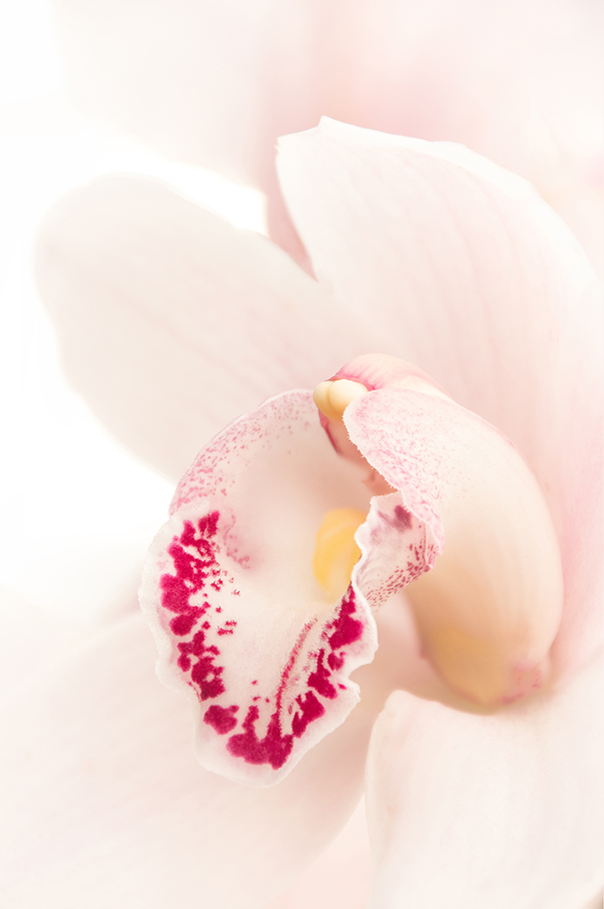 Orchidee - Orchid
