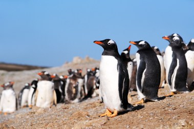 Anjci All Over | Falkland Islands
