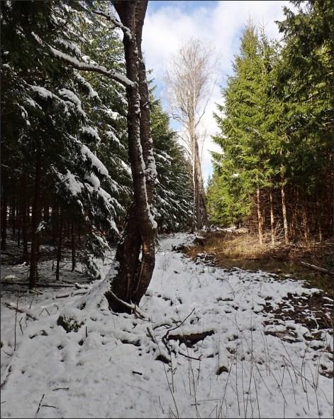 snötäcke - skillnad i skuggan och i solen