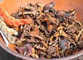 Torkade färgsvampar till svampfärgning - bl. a. olika spindlingar, soppar och citronslemskivling...