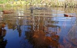 Den blå himlen speglar sig i dammens vatten