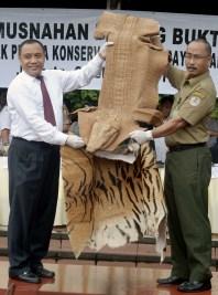Petugas menunjukkan barang bukti hasil kejahatan konservasi sumber daya alam dan ekosistemnya sebelum dimusnahkan di Lapangan Bhayangkara, Jakarta, Selasa (2/2).