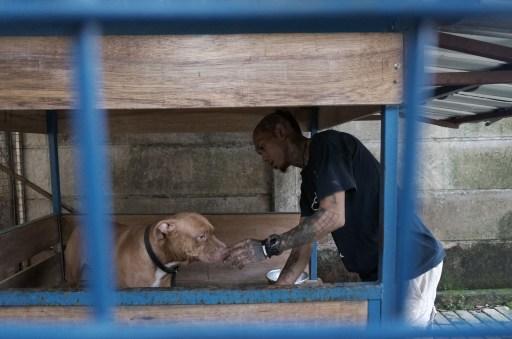 Rehabilitasi Anjing Liar-Aulia Rachman (2)