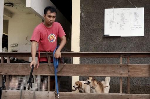 Rehabilitasi Anjing Liar-Aulia Rachman (32)