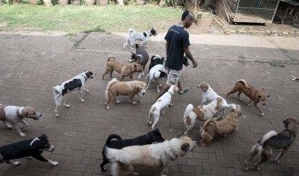 Rehabilitasi Anjing Liar-Aulia Rachman (34)
