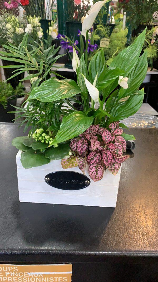 006 jardinera con plantas variadas
