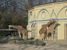 Spring Berlin Zoo Anmck