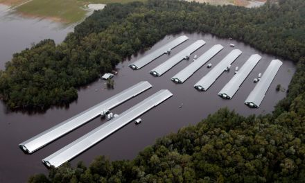 Water quality under serious threat after hurricane Florence.