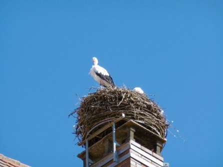 Faszination Storch