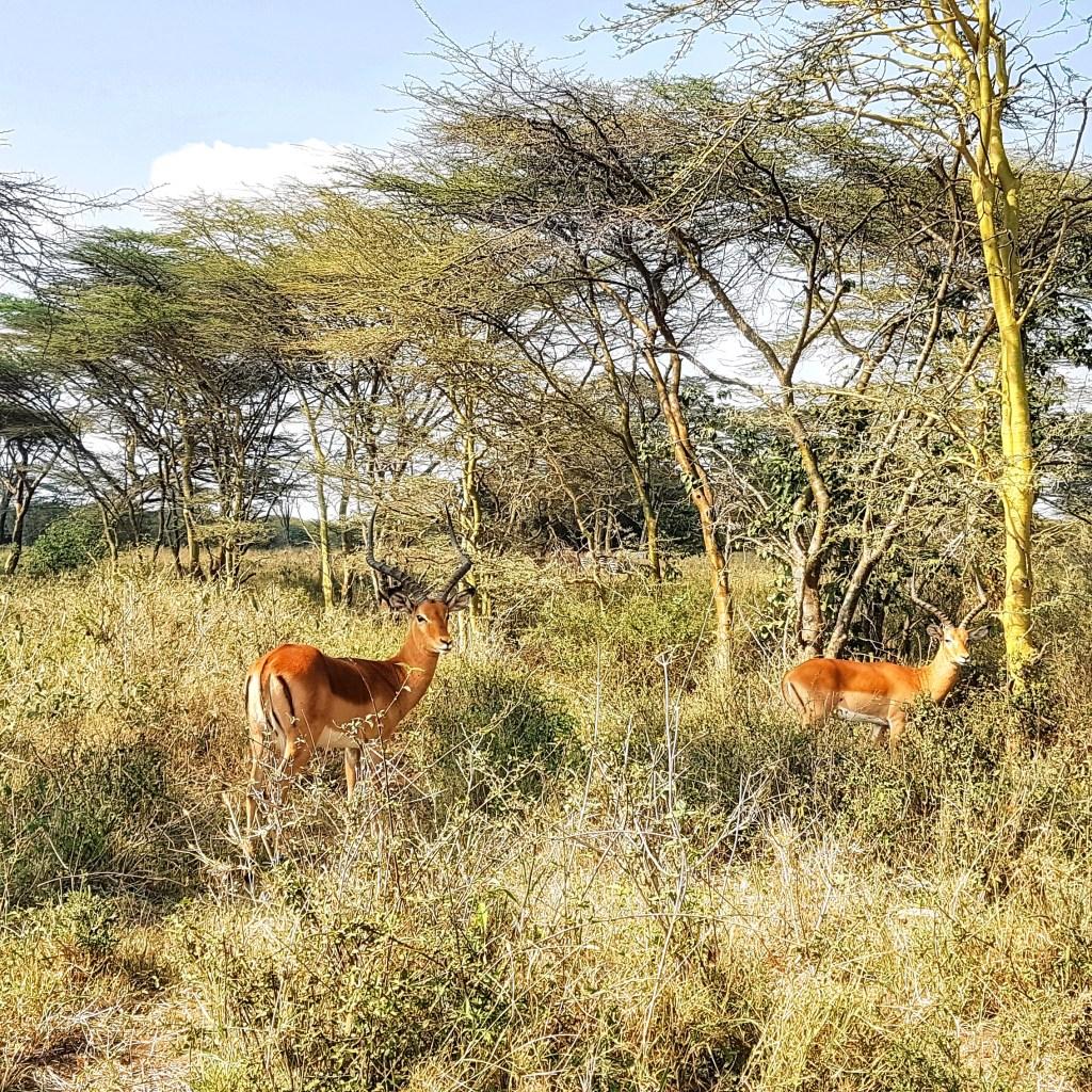 Национальный парк Найроби Кения