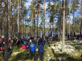 Vacker skogsarena på Kolmårdskavlen...