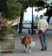 Una bella passeggiata con l'amico più fidato.