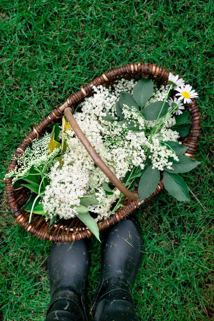 Foraging for the elderflower #elderflowercordial | via @annabanana.co