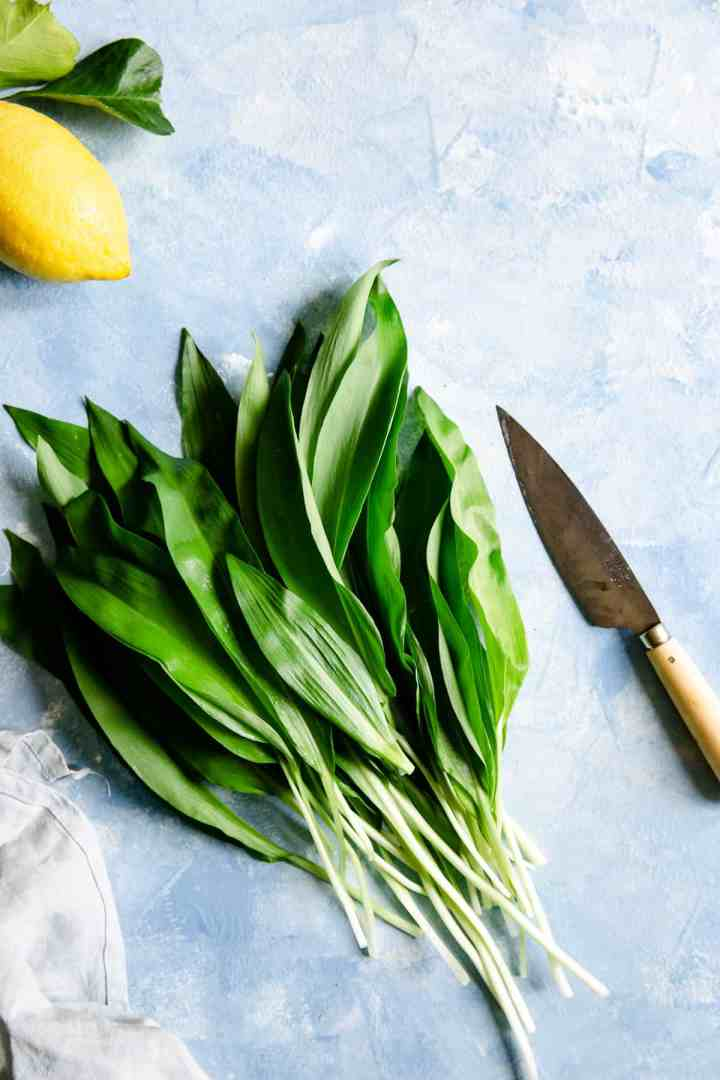 overhead shot of bunch of wild garlic leaves on a blue background