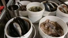 Pickled herring at Starsky Polish store in Mississauga