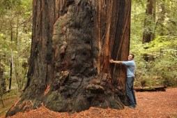 Ben hugging a tree in the Avenue of the Giants in California