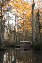 Swamp tour in Slidell, Louisiana
