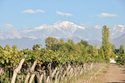 Kaiken winery (with the Andes in the background), Lujan de Cuyo, Argentina