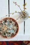 Detailaufnahme Kaktus