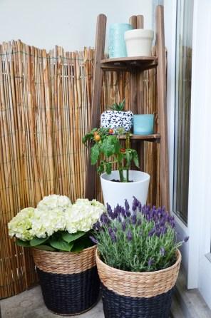 Balkon Pflanzen - annablogie