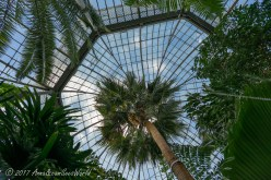 The Tropical Palm House