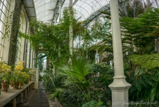 The Temperate Palm House