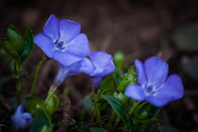 daffodils-flowers-9