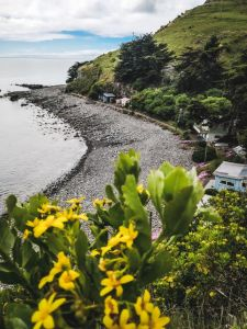 A coastal view with rocky beach and flowers