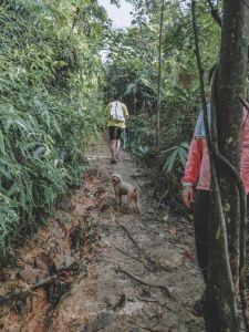 A Dog Hiking Up A Muddy Trail