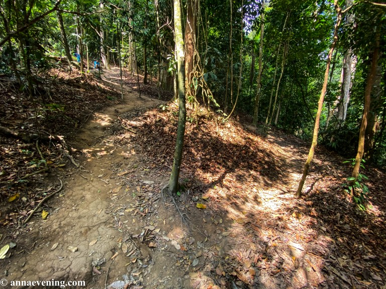 A trail condition in the jungle