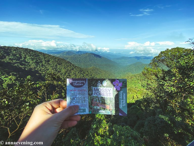 A hand holding a ticket that says mossy forest with a lookout behind