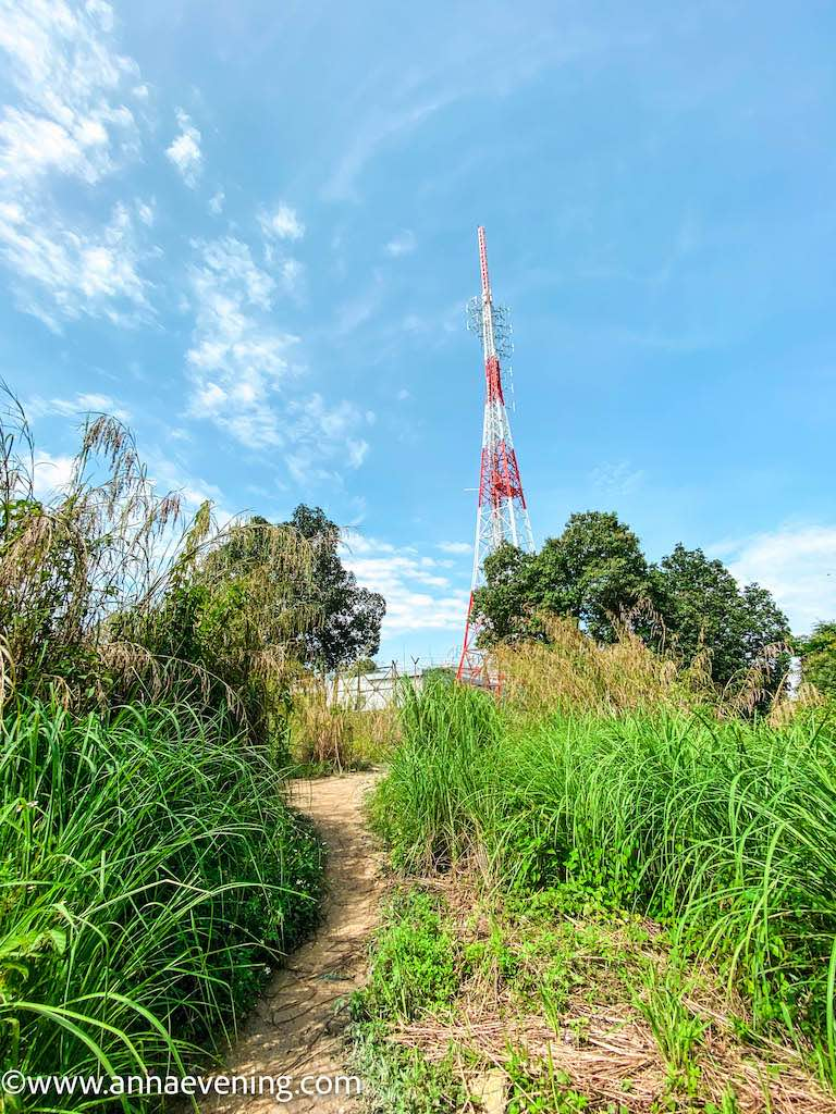 A communication tower located amidst overgrown grass