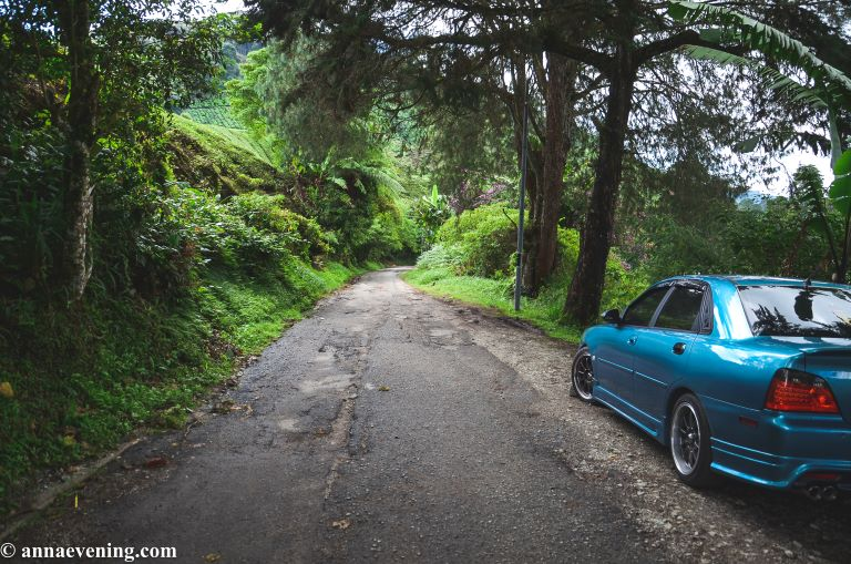 A blue car parked at the side of a tar road in the forest