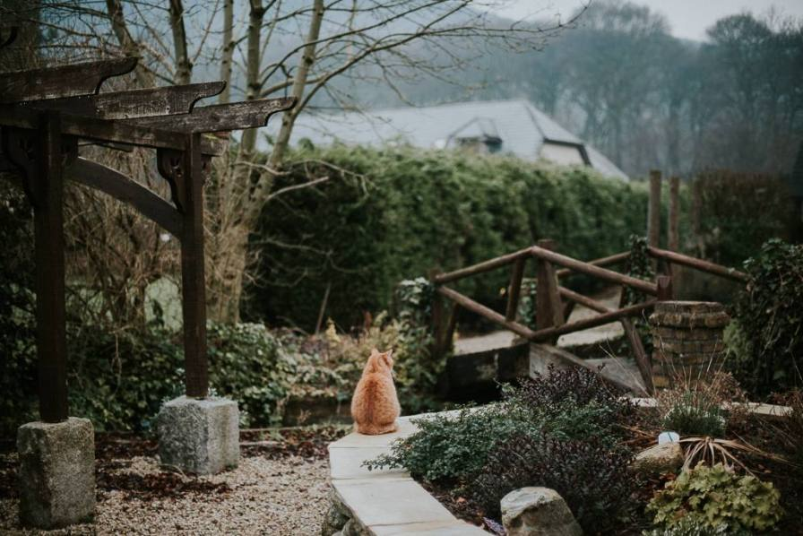 Ginger cat Wicklow