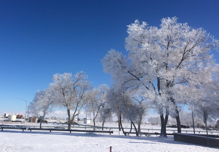 Hoarfrost trees at a rest area